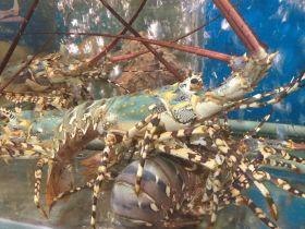 Top cửa hàng bán hải sản tươi sống sạch, uy tín tại Bình Chánh TP.HCM
