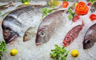 Top cửa hàng bán hải sản đông lạnh tươi ngon, uy tín tại Nhà Bè TP.HCM