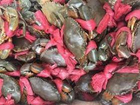 Top cửa hàng bán cua biển tươi sống tại Nha Trang