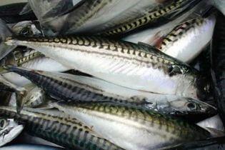 Top cửa hàng bán cá biển tươi sống tại Cần Thơ