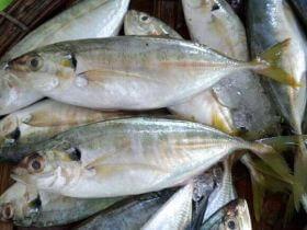 Top cửa hàng bán cá biển tươi sống tại Đà Nẵng