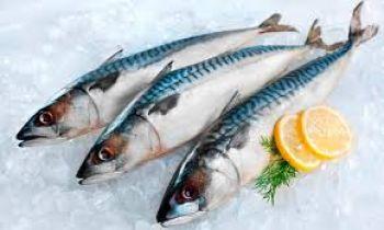 Top cửa hàng bán cá biển tươi sống tại Vũng Tàu