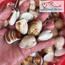 Top cửa hàng bán nghêu, sò, ốc tươi sống tại Nha Trang