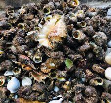 Top cửa hàng bán nghêu, sò, ốc tươi sống tại TP.Biên Hòa