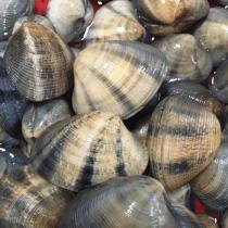 Top cửa hàng bán nghêu, sò, ốc tươi sống tại Vũng Tàu